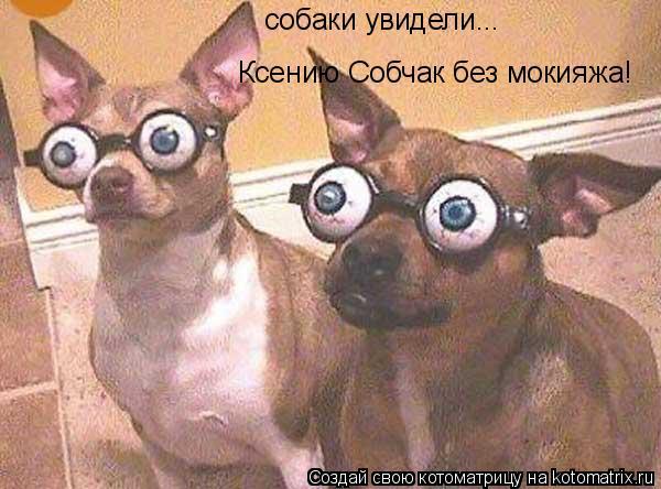 Котоматрица: собаки увидели... Ксению Собчак без мокияжа!