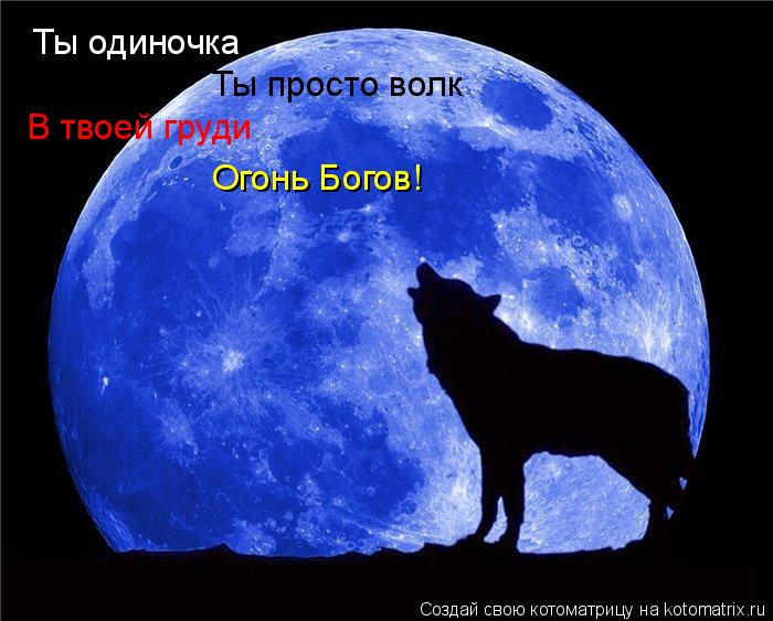 Котоматрица: Ты одиночка Ты просто волк В твоей груди Огонь Богов!