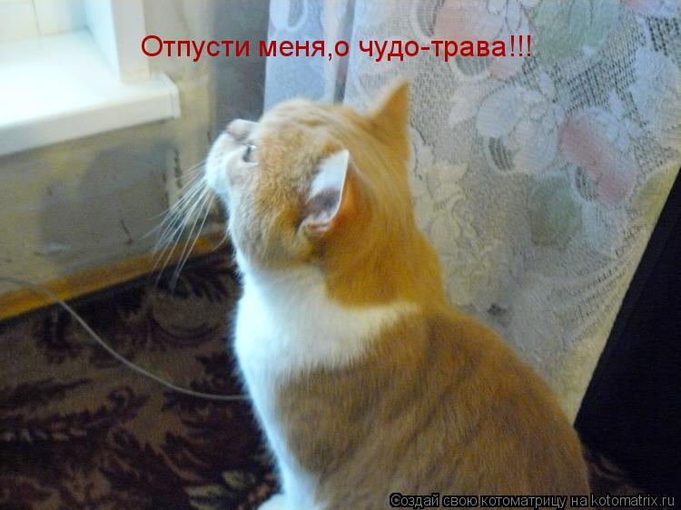 Котоматрица: Отпусти меня,о чудо-трава!!!