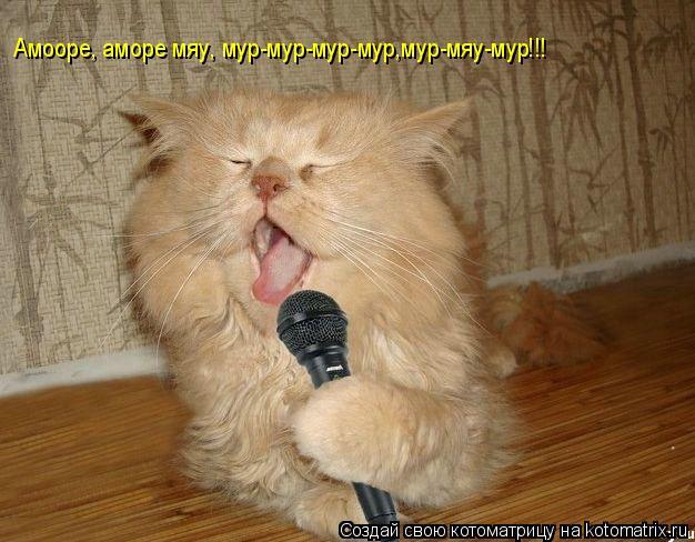 Котоматрица: Амооре, аморе мяу, мур-мур-мур-мур,мур-мяу-мур!!!