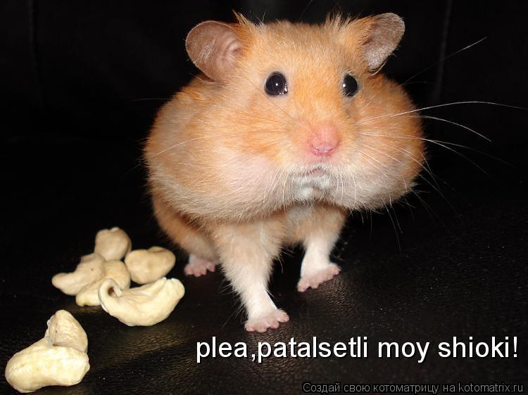 Котоматрица: plea,patalsetli moy shioki!