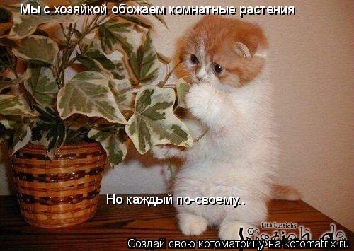 Котоматрица: Мы с хозяйкой обожаем комнатные растения Но каждый по-своему..