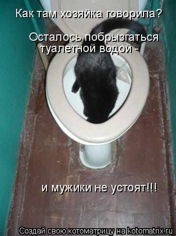 Котоматрица: и мужики не устоят!!! туалетной водой - Осталось побрызгаться Как там хозяйка говорила?