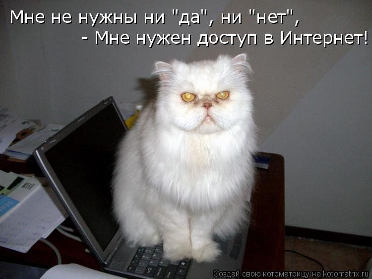 """Котоматрица: Мне не нужны ни """"да"""", ни """"нет"""",  - Мне нужен доступ в Интернет!"""