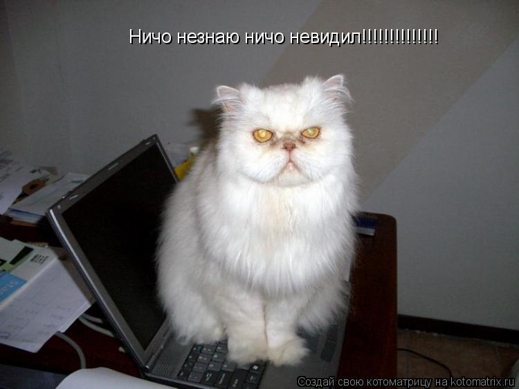 Котоматрица: Ничо незнаю ничо невидил!!!!!!!!!!!!!!