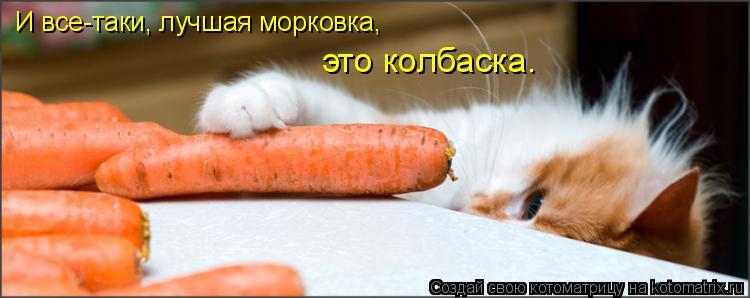 Котоматрица: И все-таки, лучшая морковка,  это колбаска.