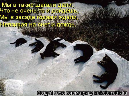 Котоматрица: Мы в такие шагали дали, Что не очень-то и дойдёшь, Мы в засаде годами ждали, Невзирая на снег и дождь..
