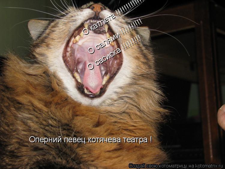 Котоматрица: О салями !!!!!!!!!! О сасиска !!!!!!!!! О катлета !!!!!!!!!!!!!!!! Оперний певец котячева театра !