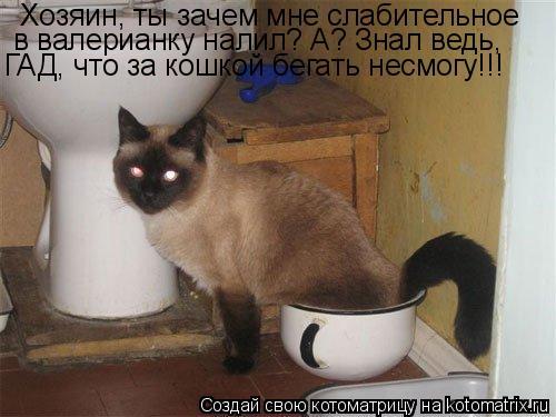 Котоматрица: Хозяин, ты зачем мне слабительное  в валерианку налил? А? Знал ведь, ГАД, что за кошкой бегать несмогу!!!