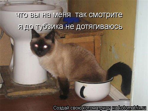 Котоматрица: что вы на меня  так смотрите я до тубзика не дотягиваюсь