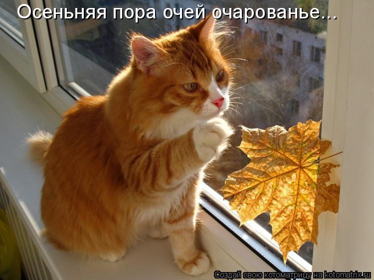 Котоматрица: Осеньняя пора очей очарованье...