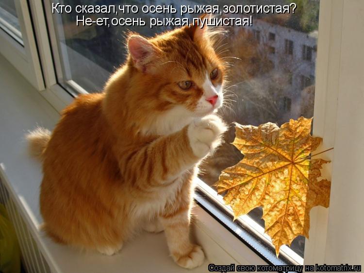Котоматрица: Кто сказал,что осень рыжая,золотистая? Не-ет,осень рыжая,пушистая!