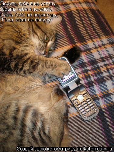Котоматрица: Любить тебя я не устану, Забыть тебя я не смогу, Слать СМС не перестану, Пока ответ не получу!