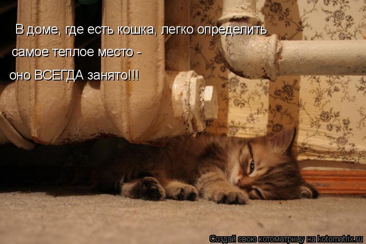 Котоматрица: В доме, где есть кошка, легко определить самое теплое место -  оно ВСЕГДА занято!!!