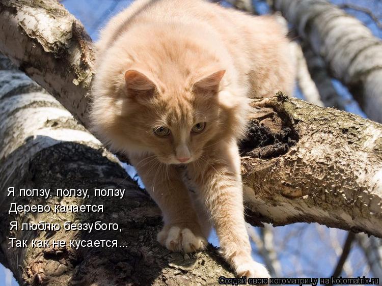 Котоматрица: Я ползу, ползу, ползу Дерево качается Я люблю беззубого, Так как не кусается...