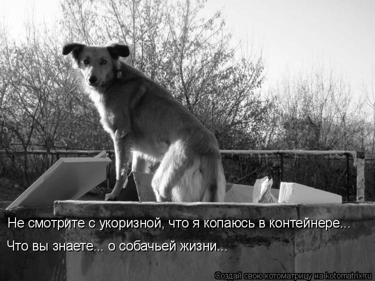 Котоматрица: Не смотрите с укоризной, что я копаюсь в контейнере... Что вы знаете... о собачьей жизни...