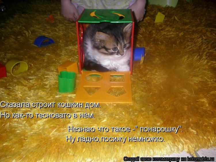 """Котоматрица: Сказала,строит кошкин дом. Но как-то тесновато в нём. Незнаю что такое -"""" понарошку"""". Ну ладно,посижу немножко."""