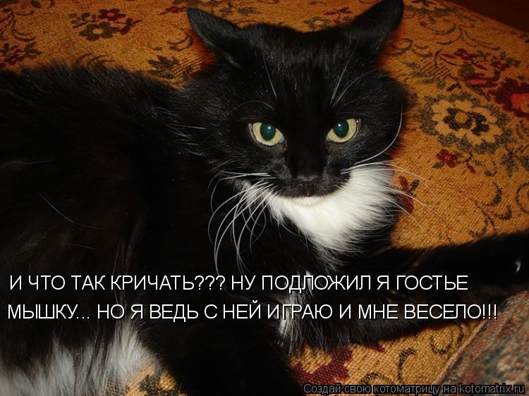Котоматрица: И ЧТО ТАК КРИЧАТЬ??? НУ ПОДЛОЖИЛ Я ГОСТЬЕ МЫШКУ... НО Я ВЕДЬ С НЕЙ ИГРАЮ И МНЕ ВЕСЕЛО!!!