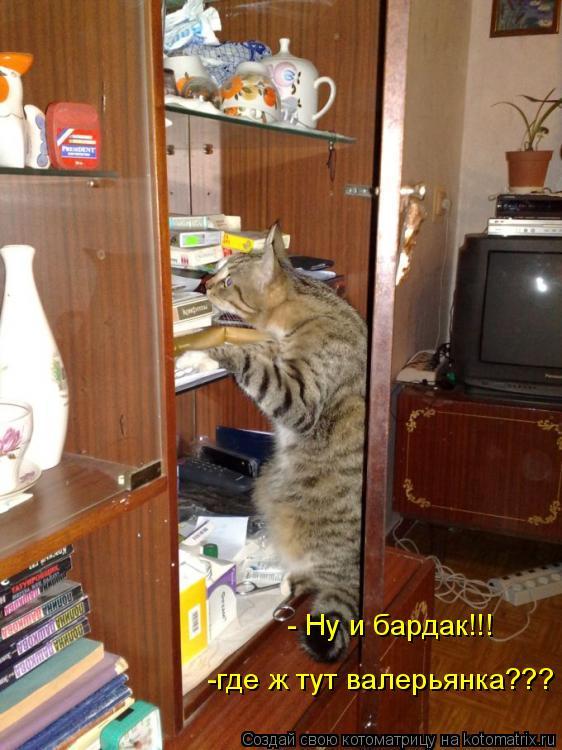 Котоматрица: -где ж тут валерьянка??? - Ну и бардак!!!