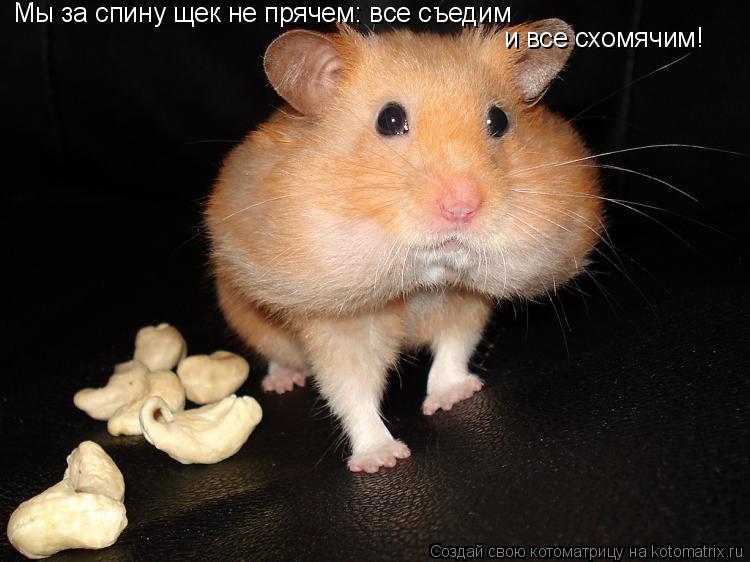 Котоматрица: Мы за спину щек не прячем: все съедим и все схомячим!