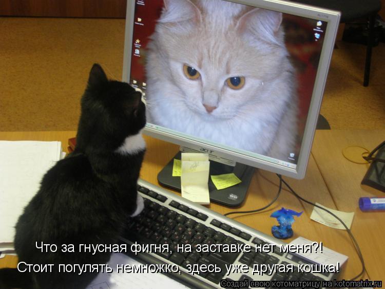 Котоматрица: Что за гнусная фигня, на заставке нет меня?! Стоит погулять немножко, здесь уже другая кошка!