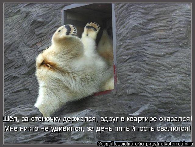 Котоматрица: Шёл, за стеночку держался, вдруг в квартире оказался! Мне никто не удивился, за день пятый гость свалился!