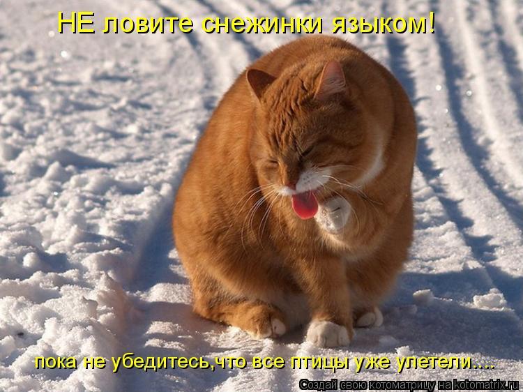 Котоматрица: пока не убедитесь,что все птицы уже улетели.... НЕ ловите снежинки языком!