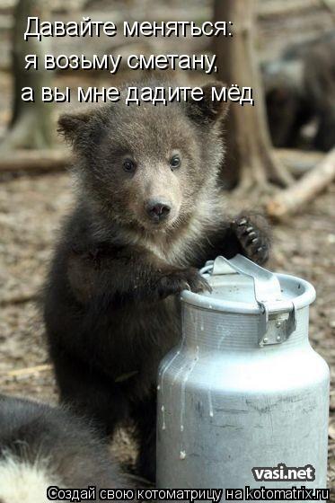 Котоматрица: Давайте меняться: я возьму сметану, а вы мне дадите мёд