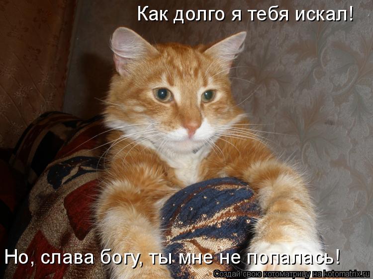 Котоматрица: Как долго я тебя искал! Но, слава богу, ты мне не попалась!