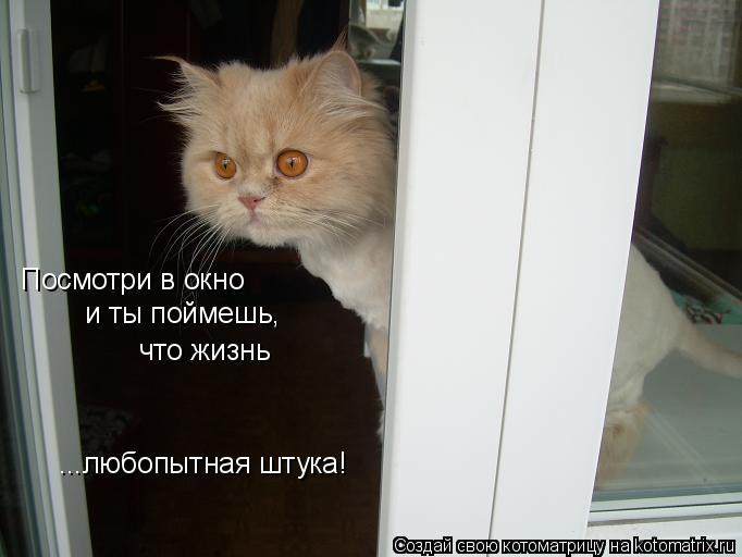 Котоматрица: Посмотри в окно и ты поймешь, что жизнь ...любопытная штука!