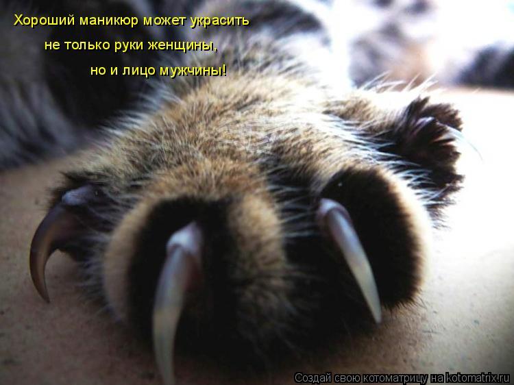 Котоматрица: Хороший маникюр может украсить  не только руки женщины,  но и лицо мужчины!
