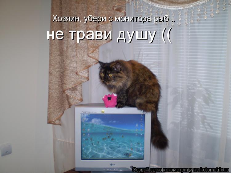 Котоматрица: Хозяин, убери с монитора рыб... не трави душу ((