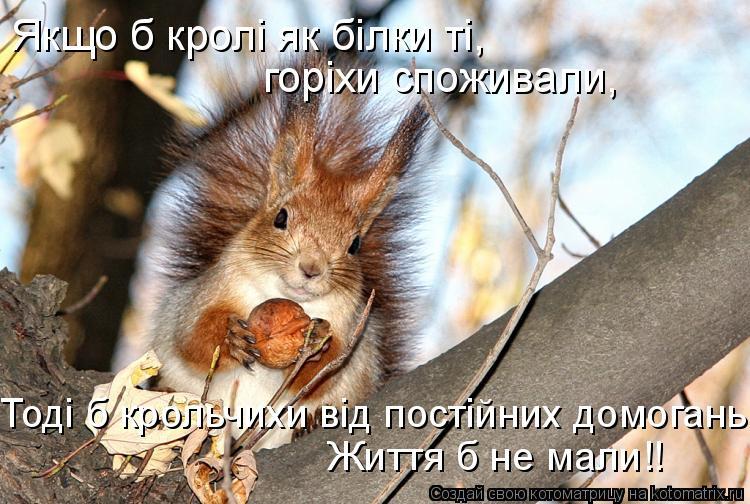 Котоматрица: Якщо б кролi як бiлки тi, горiхи споживали, Життя б не мали!! Тодi б крольчихи вiд постiйних домогань