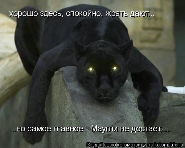 Котоматрица: хорошо здесь, спокойно, жрать дают... ...но самое главное - Маугли не достаёт...