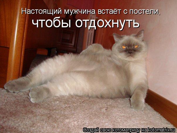 Котоматрица: Настоящий мужчина встаёт с постели, чтобы отдохнуть