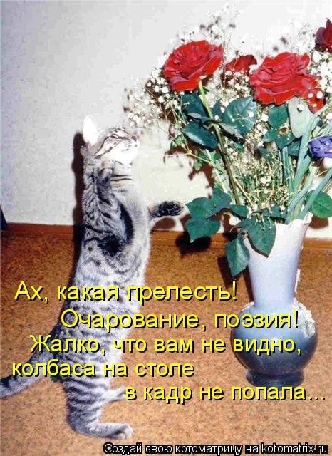 Котоматрица: Ах, какая прелесть! Очарование, поэзия! Жалко, что вам не видно, колбаса на столе  в кадр не попала...
