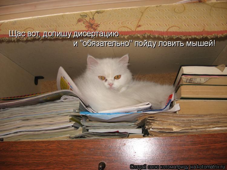 """Котоматрица: Щас вот, допишу дисертацию и """"обязательно"""" пойду ловить мышей!"""