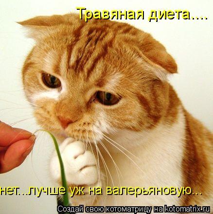 Котоматрица: Травяная диета.... нет...лучше уж на валерьяновую...