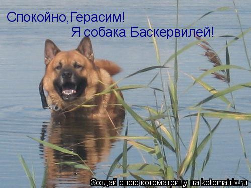 Котоматрица: Спокойно,Герасим! Я собака Баскервилей!