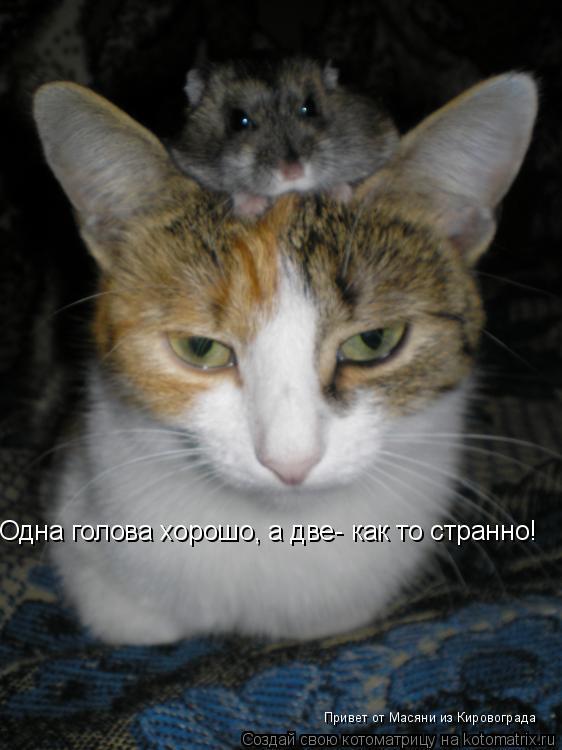 Котоматрица: Одна голова хорошо, а две- как то странно! Привет от Масяни из Кировограда