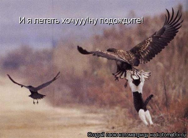Котоматрица: И я летать хочууу!ну подождите!