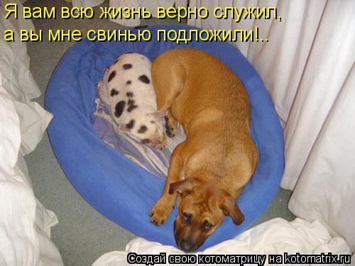 Котоматрица: Я вам всю жизнь верно служил, а вы мне свинью подложили!..