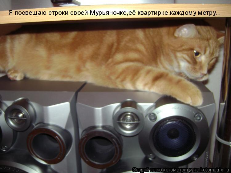 Котоматрица: Я посвещаю строки своей Мурьяночке,её квартирке,каждому метру...
