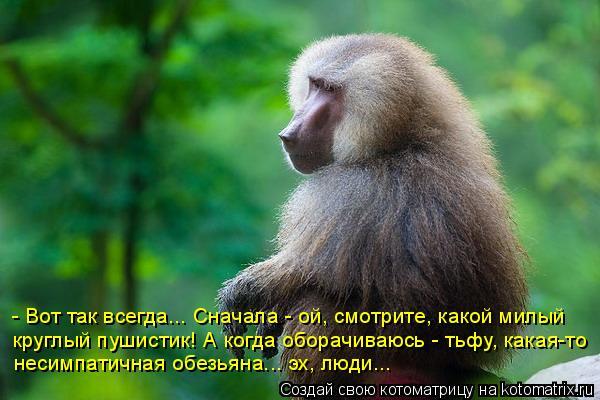 Котоматрица: - Вот так всегда... Сначала - ой, смотрите, какой милый  круглый пушистик! А когда оборачиваюсь - тьфу, какая-то несимпатичная обезьяна... эх, люд