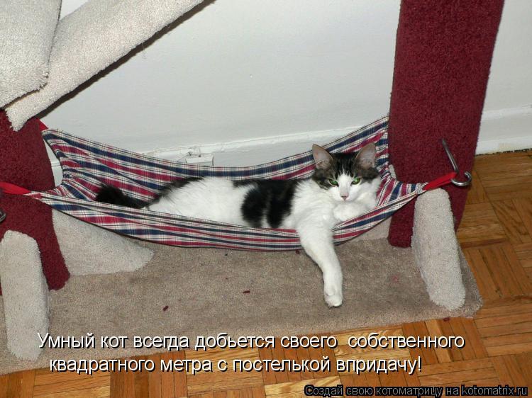 Котоматрица: Умный кот всегда добьется своего  собственного  квадратного метра с постелькой впридачу!