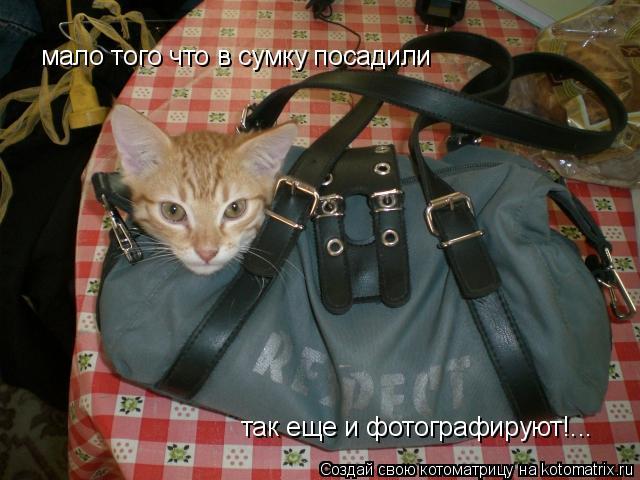 Котоматрица: мало того что в сумку посадили так еще и фотографируют!...