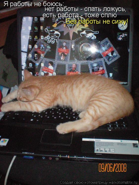 Котоматрица: Я работы не боюсь: нет работы - спать ложусь, есть работа - тоже сплю Без работы не сижу!