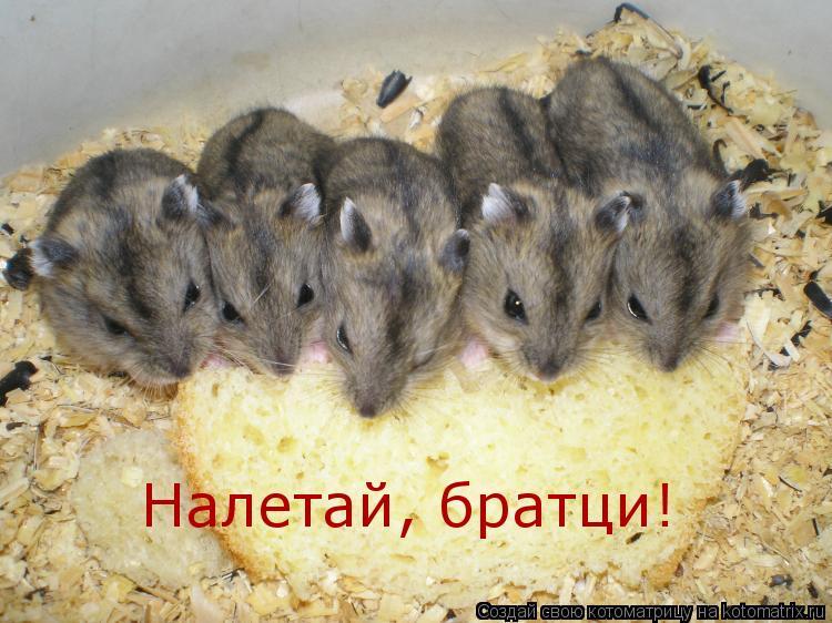 Котоматрица: Налетай, братци!