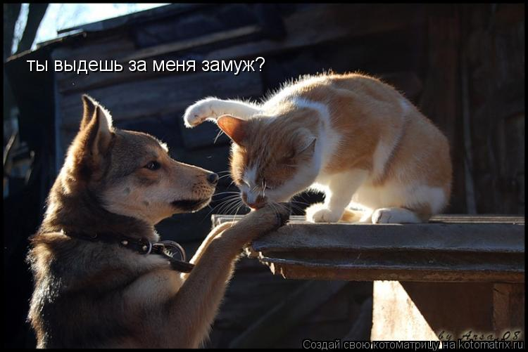 Котоматрица: ты выдешь за меня замуж?