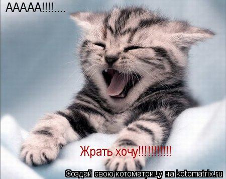 Котоматрица: ААААА!!!!.... Жрать хочу!!!!!!!!!!!